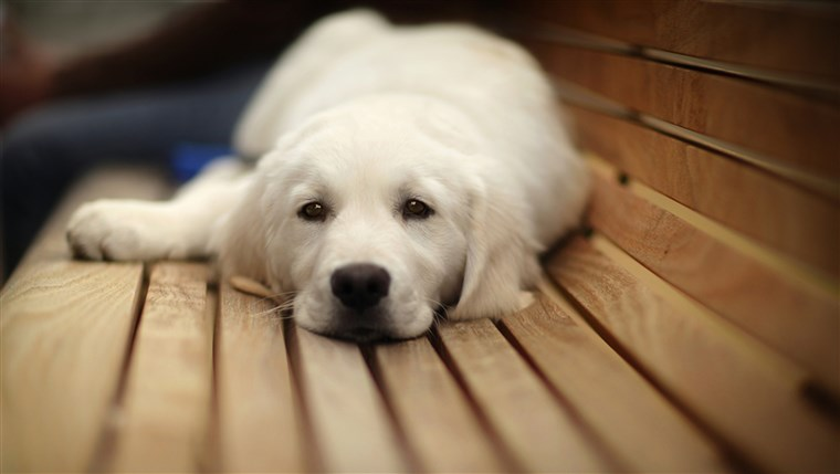 pooped; Shutterstock ID 95102623; PO: TODAY.com