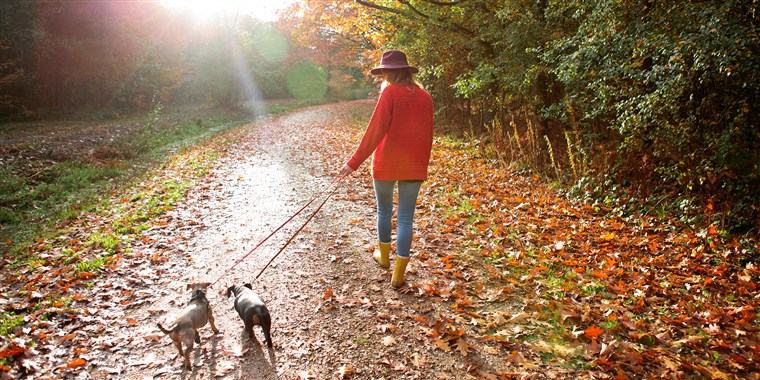 Mulher walking dogs in an autumn woodland