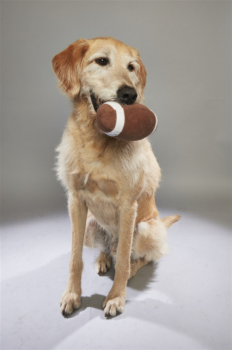 Anjing holding a football toy in his mouth