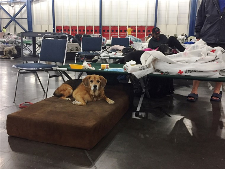 Noen nonprofits are helping care for pets sheltering with their families at The George R. Brown Convention Center in Houston.