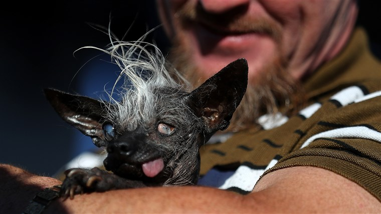 Caninos Compete In World's Ugliest Dog Contest