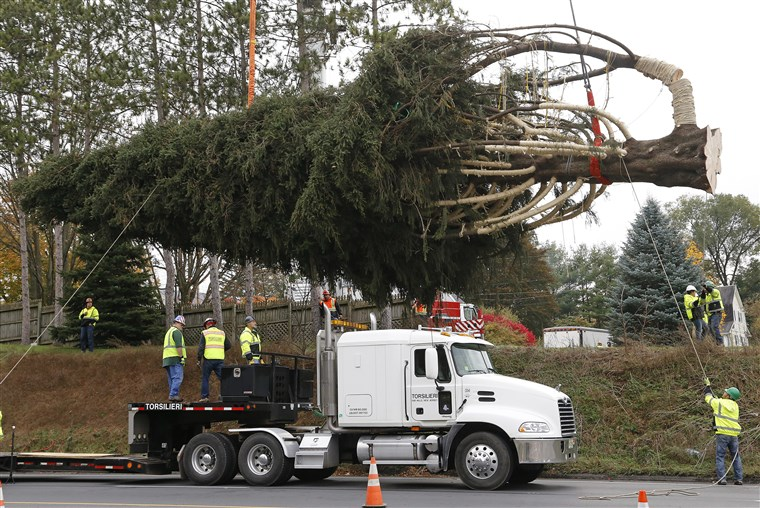 Op Thursday the Pennsylvania tree was cut and readied for a road trip to the big city.