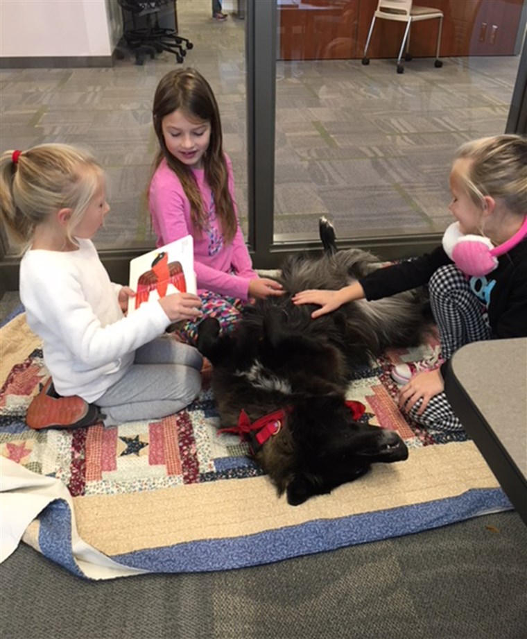 lei seg library dog attracts kid readers