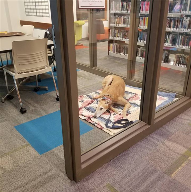 Stikke sat in his usual spot at the library, only no one was there to read to him on that fateful day.