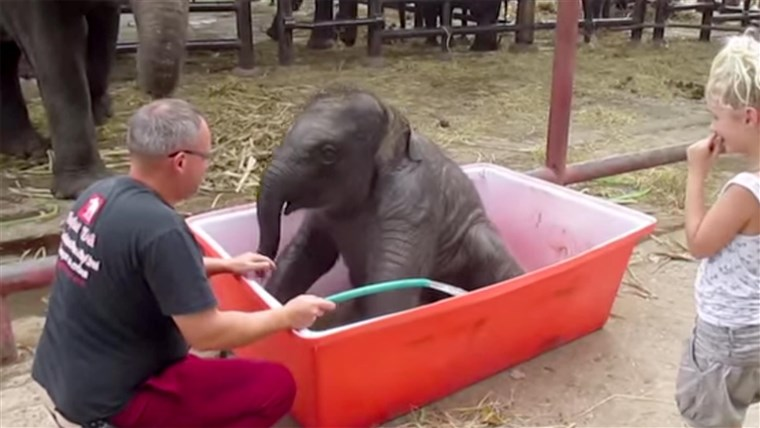Bayi elephant 'Double-Trouble' lives up to his name.