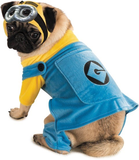 UMA minion is the perfect pet costume for a big-eyed pug