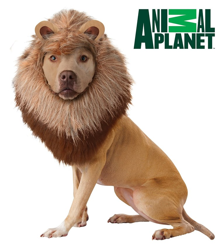Cecil The Lion May Be Inspiring Consumers to buy Lion Halloween Costumes For Their Dog