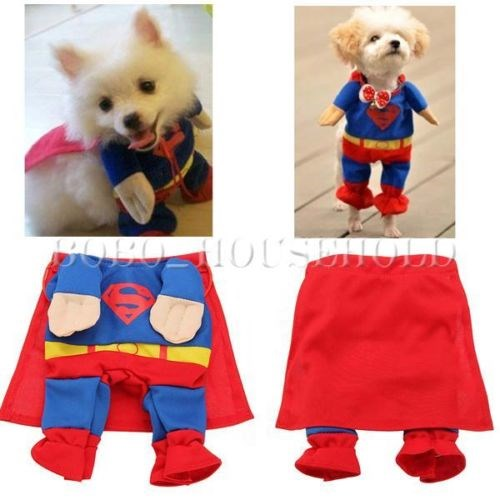 Cães dressed up as Superman is a halloween costume favorite