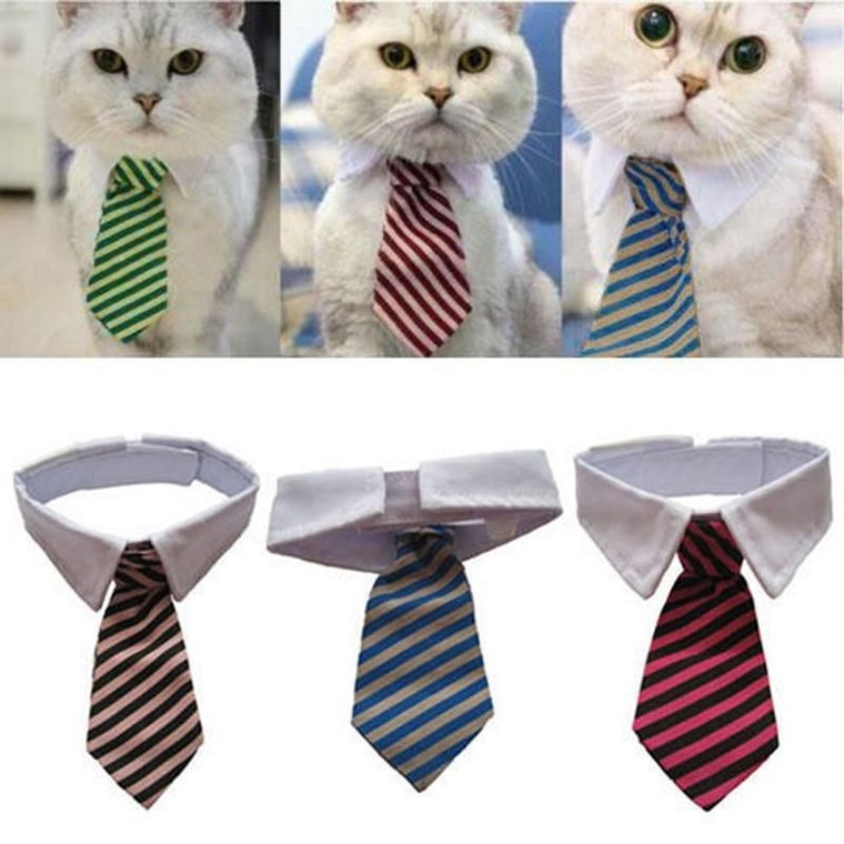 dia das Bruxas costumes for cats are popular. This business tie option is a simple but effective choice.