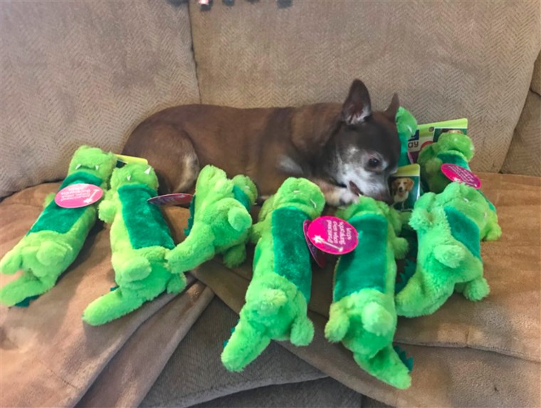 Jaxon the dog reunites with his favorite toy, a discontinued stuffed animal