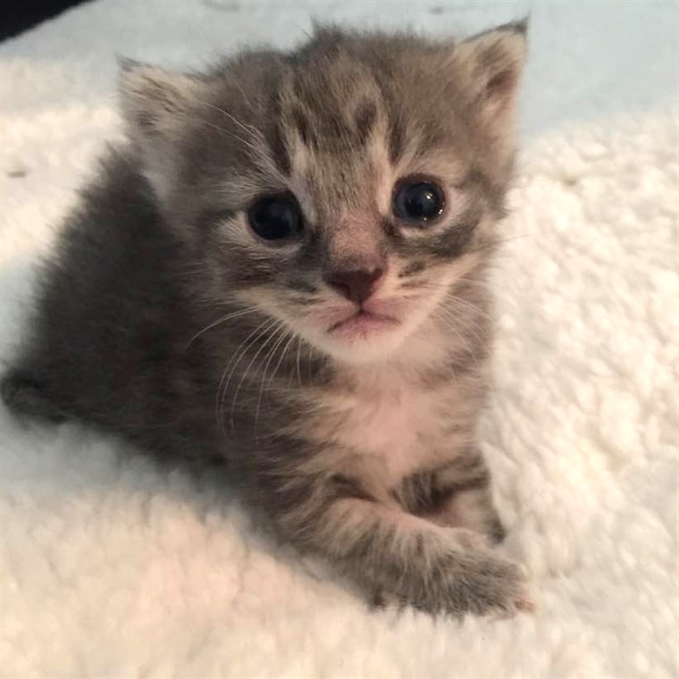 Dingen to know before fostering a kitten