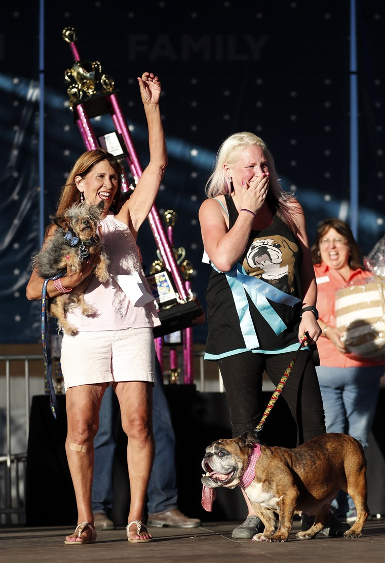 Image: Worlds Ugliest Dog Contest